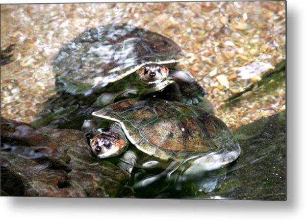 Turtle Two Turtle Love Metal Print