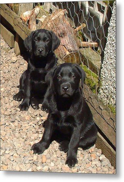 Twin Black Labrador Puppies Metal Print