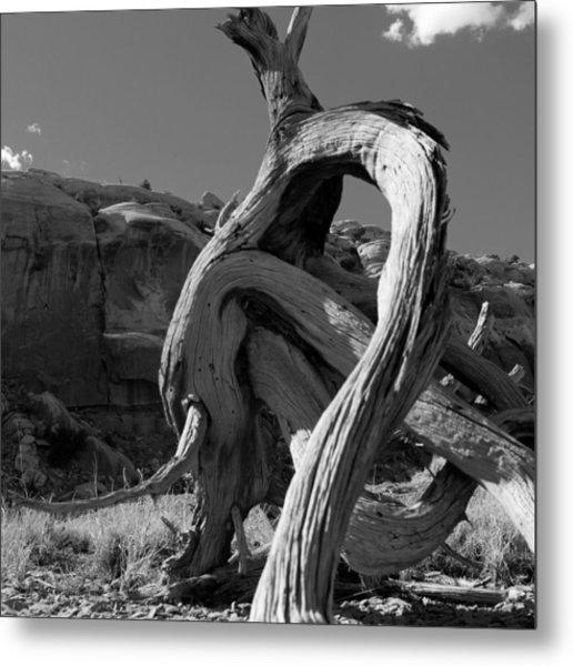 Twisted Root Metal Print by Dale Davis
