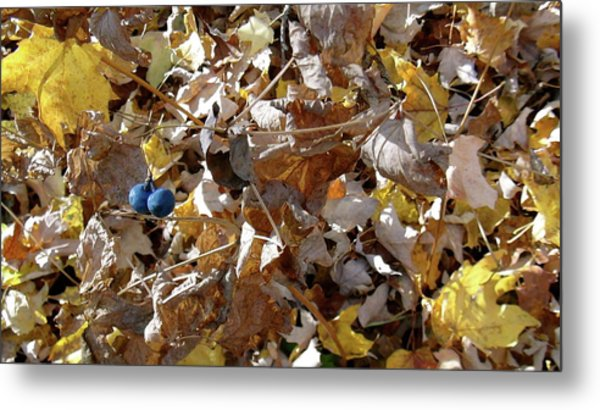 Two Blue Berries Metal Print by Mike Stouffer