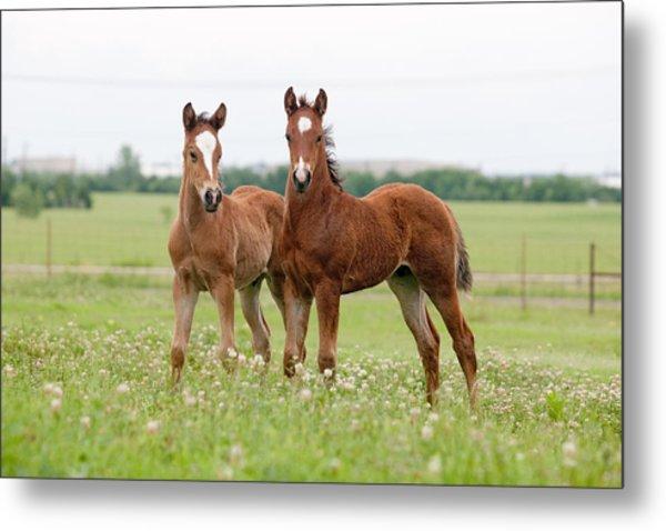 Two Foals Standing Metal Print