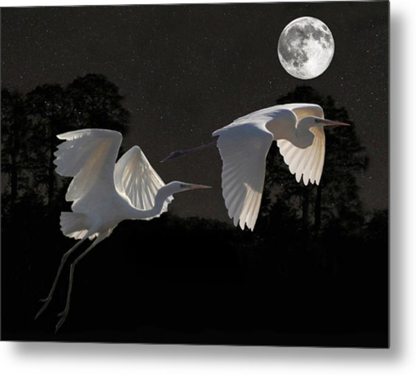 Metal Print featuring the mixed media Two Great Egrets  by Eric Kempson