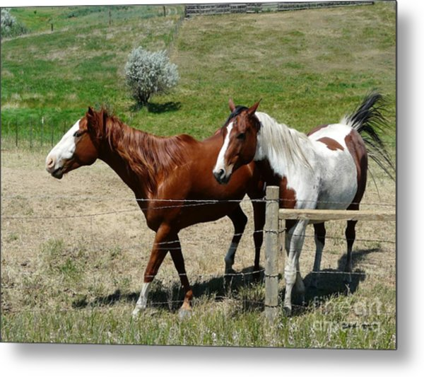 Two Pals Metal Print by Bobbylee Farrier