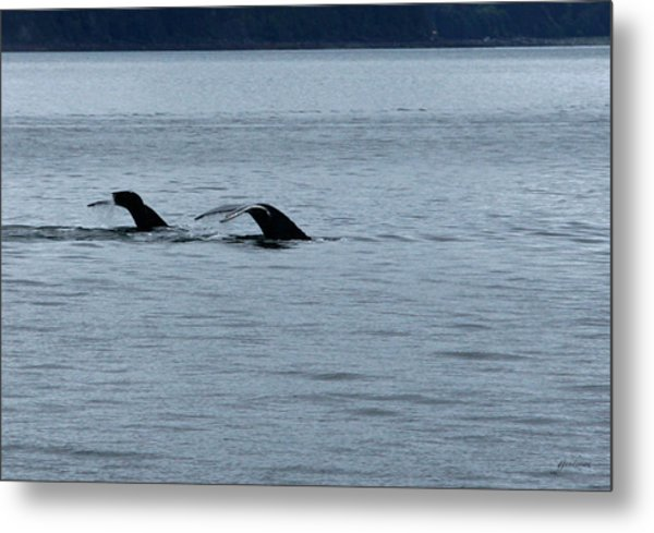Two Tails Of Whales Metal Print