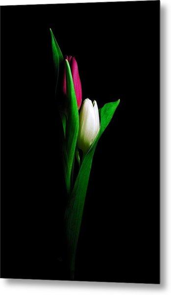 Two Tulips  Metal Print
