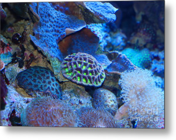 Underwater Paradise Metal Print by Andrea Simon