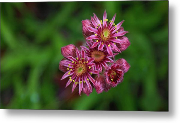 Unknown Flowers Metal Print