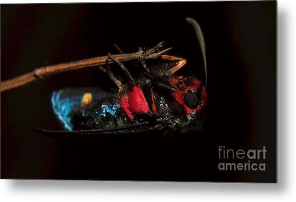 Unknown Moth Metal Print