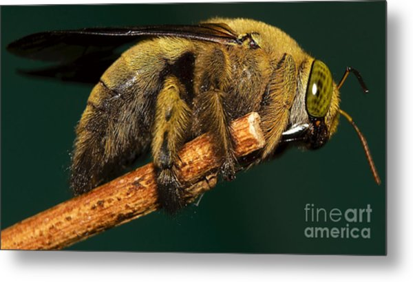 Unknown Wild Bee Metal Print