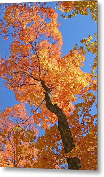Up And Up Metal Print by Sharon I Williams