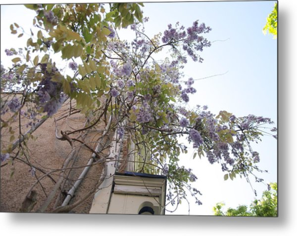 Up The Vine In Niagara On The Lake Metal Print