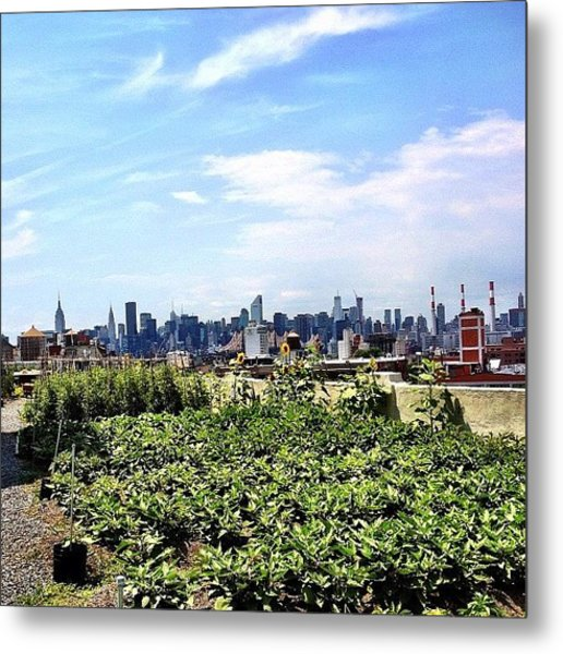 Urban Nature - New York City Metal Print