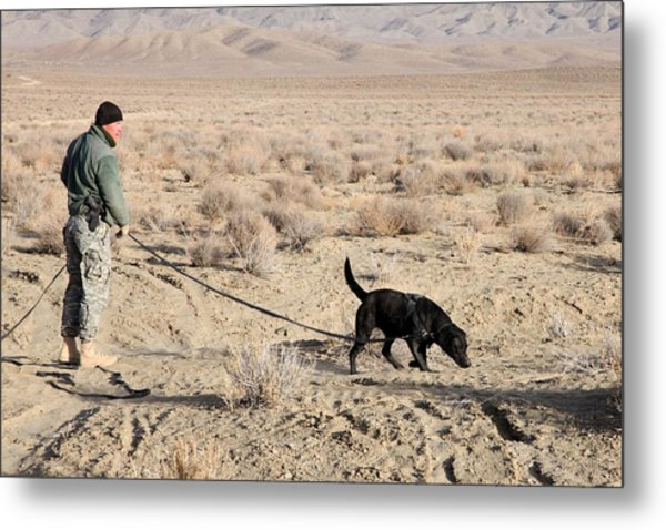 Us Soldier Works With Bear A Military Metal Print