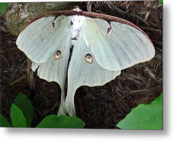 Va Moth Metal Print