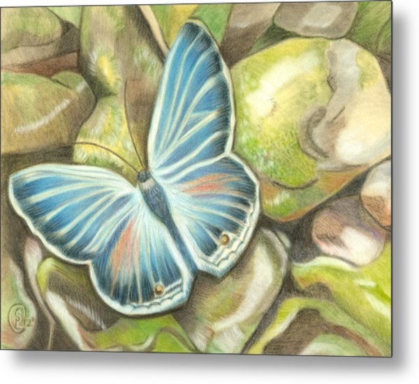 Velvet Blue Metal Print by Stephanie L Carr