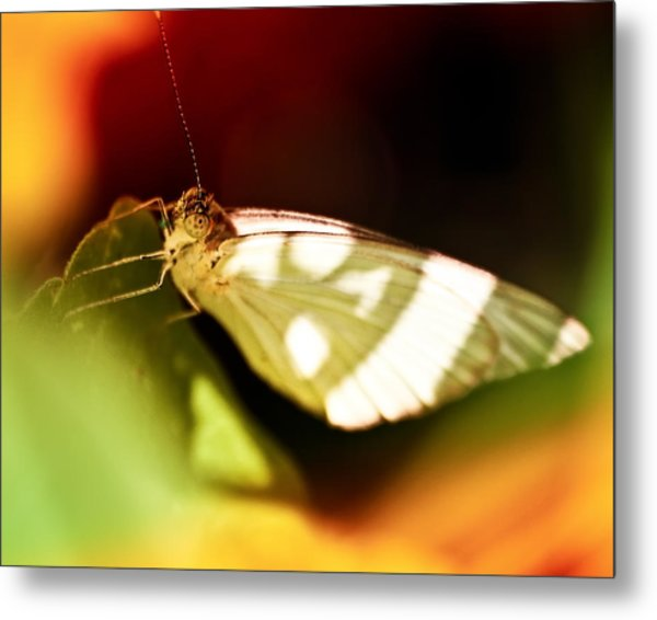Vibrant Butterfly Metal Print