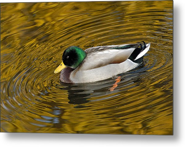 Vibrating Mallard Metal Print by Howard Knauer