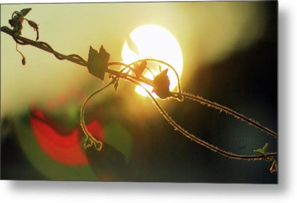 Vine Light Metal Print