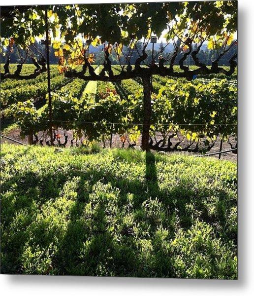 #vineyards At #sunset Metal Print