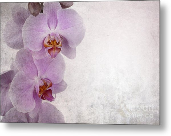 Vintage Orchids Metal Print by Jane Rix