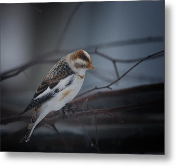 Visiter From The North Country Metal Print