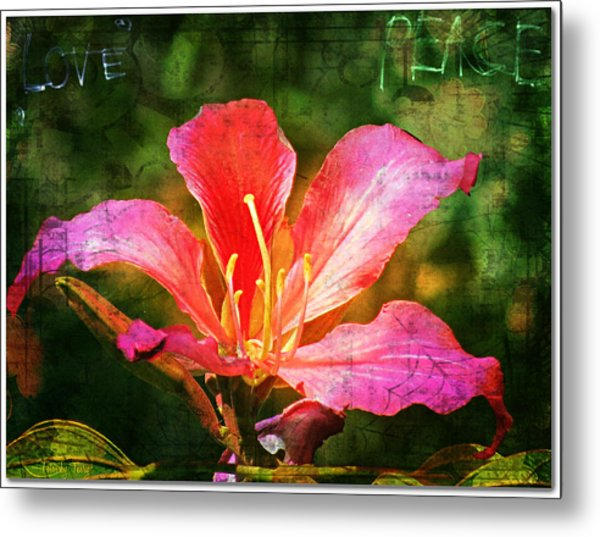 Waiting For My Orchid Tree To Bloom Metal Print
