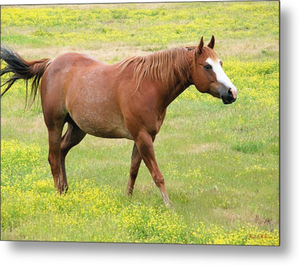 Walking Horse Metal Print