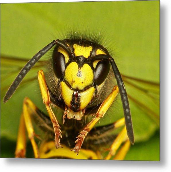 Wasp - Portrait Metal Print by Ronald Monong