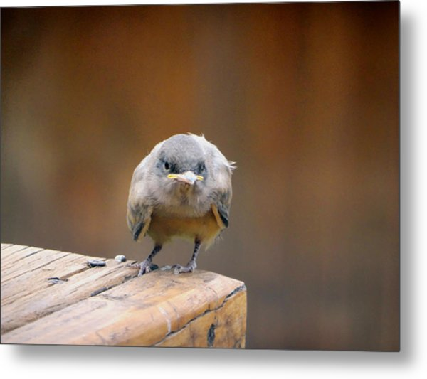 Watcha Lookin At.				 Metal Print by Margaret  Slaugh