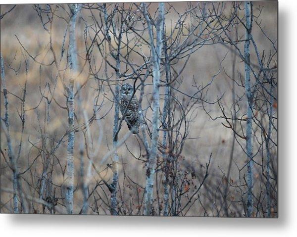 Watchful Owl Metal Print