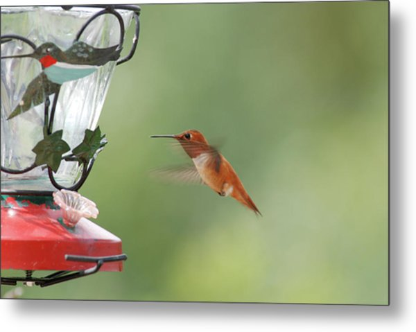 Watchful Rufous Metal Print