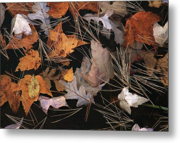 Water And Leafs  Metal Print by Mike Stouffer
