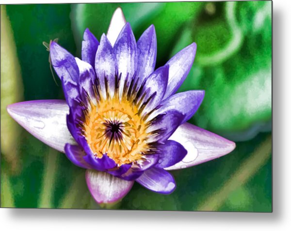 Water Color Lily Metal Print