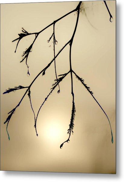 Water Droplets Metal Print by Jim Painter