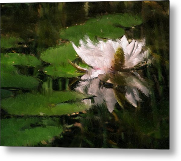 Water Lilly Metal Print by Heiko Mahr