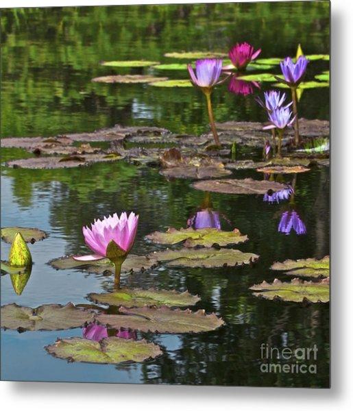 Water Lily Jewels Metal Print by Crystal Garner