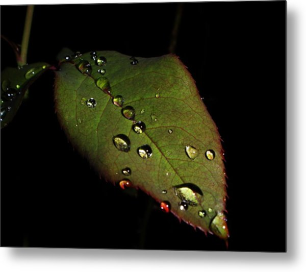 Watered-leaf Metal Print by Rosvin Des Bouillons