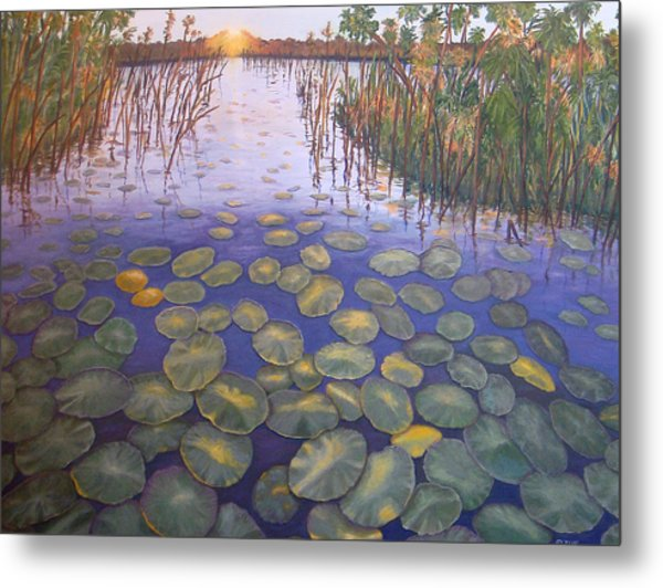 Waterlillies South Africa Metal Print