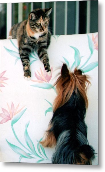 We Can Talk This Over... Metal Print by Tanya Tanski