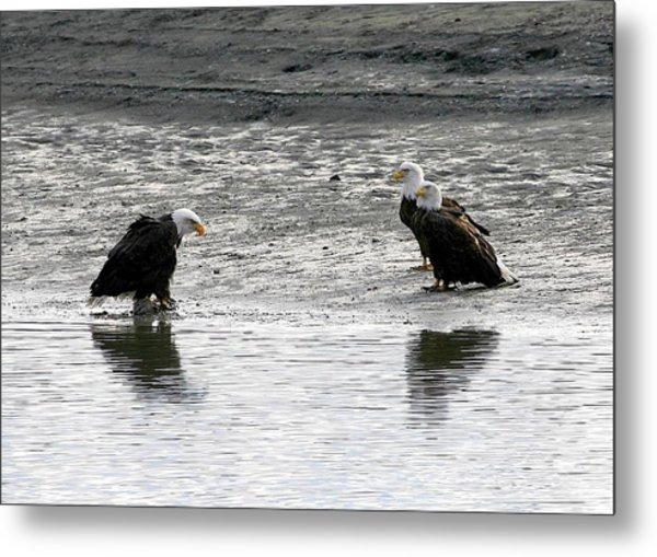 We Need To Have A Talk Metal Print by Carrie OBrien Sibley