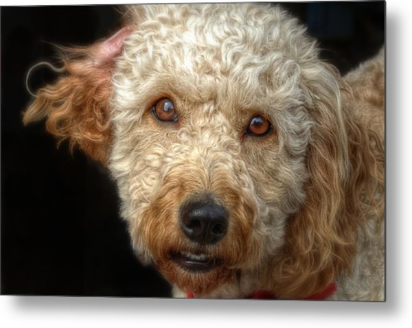 Webster At The Bar Metal Print