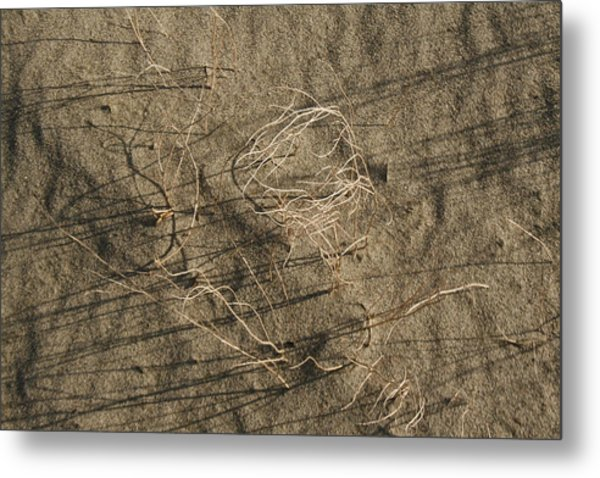 Weeds In Sand Metal Print