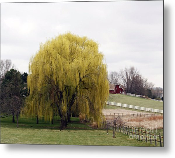Weeping Willow Tree Photograph by Yumi Johnson