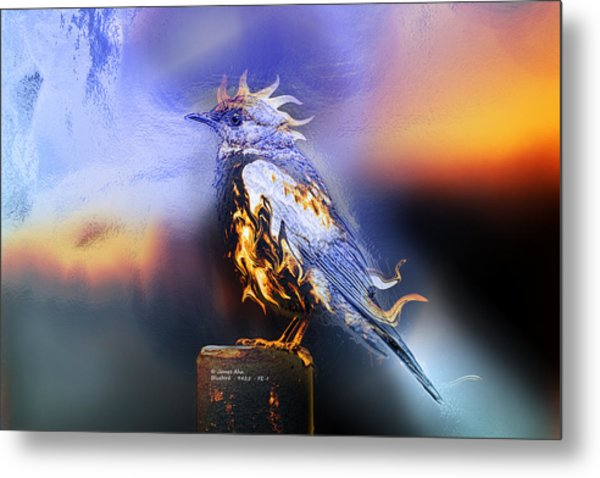 Western Bluebird Fire And Ice Metal Print