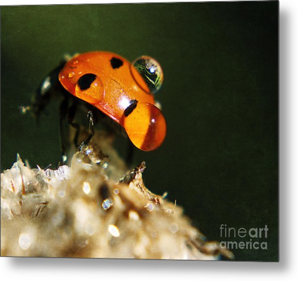 Wet Lady Bug Metal Print