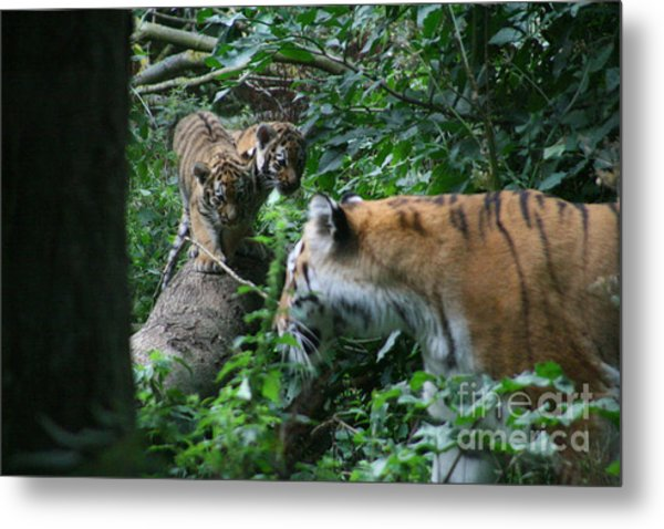What You Doing Metal Print by Carol Wright