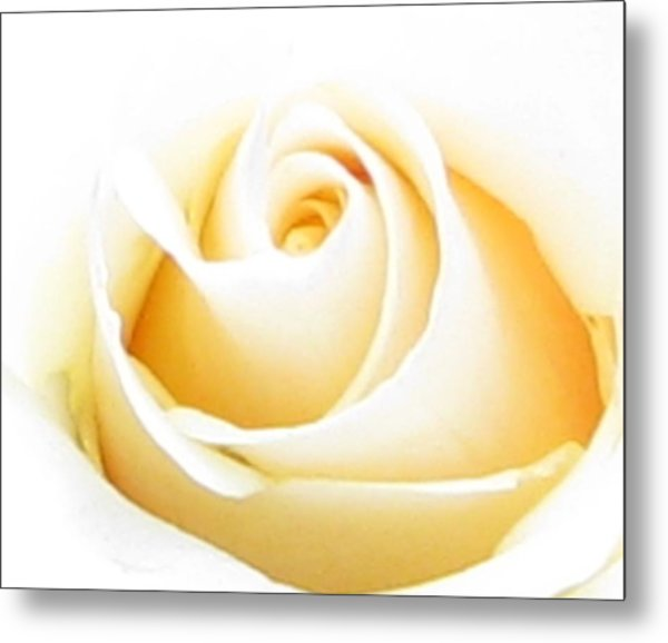 Whipped Butter Cream Rose Micros Metal Print