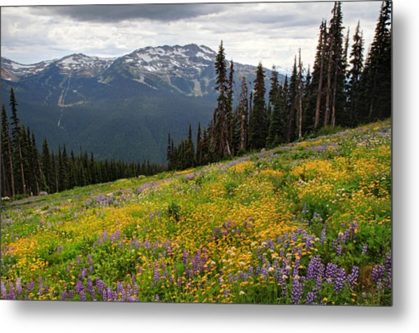 Whistler Blackcomb Wild Flowers In Bloom Metal Print by Pierre Leclerc Photography