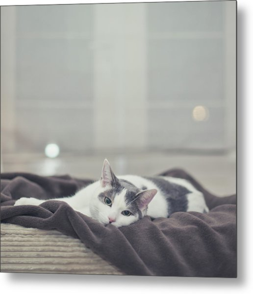 White And Grey Cat Lying On Brown Blanket Metal Print