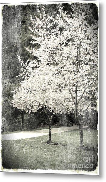 White Blooming Tree Metal Print by Danuta Bennett